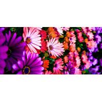 Принт прямоугольный, серия Цветы, 054