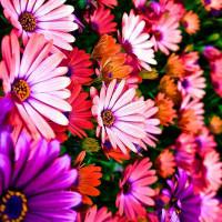 Принт квадратный, серия Цветы, 054