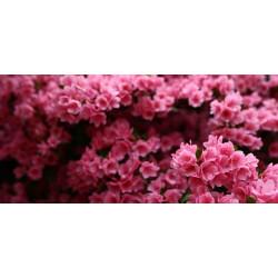 Принт прямоугольный, серия Цветы, 055