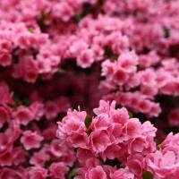 Принт квадратный, серия Цветы, 055