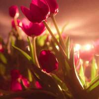 Принт квадратный, серия Цветы, 063