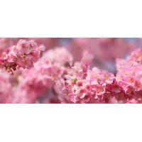 Принт прямоугольный, серия Цветы, 064