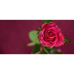 Принт прямоугольный, серия Цветы, 065