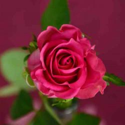 Принт квадратный, серия Цветы, 065