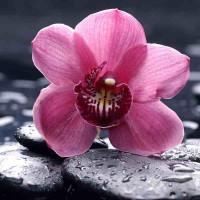 Принт квадратный, серия Цветы, 066
