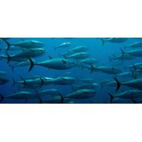 Принт прямоугольный, серия Море, 042