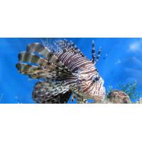 Принт прямокутний, серія Море, 067